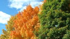 Jak pogoda wpływa na kolor liści