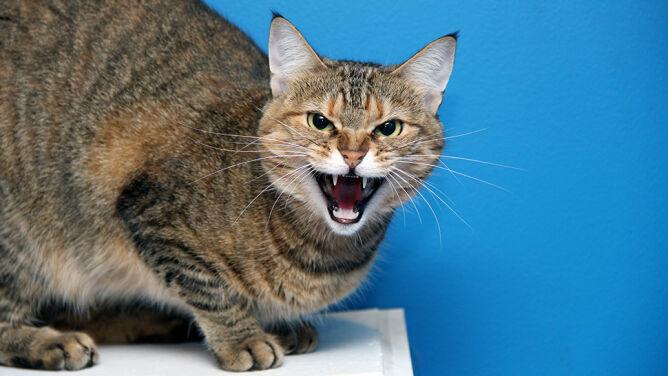 Atak kota. Na pomoc właścicielkom ruszyła straż pożarna
