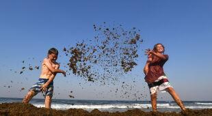 Zakwit brunatnic w Australii (PAP/EPA/DAVE HUNT)