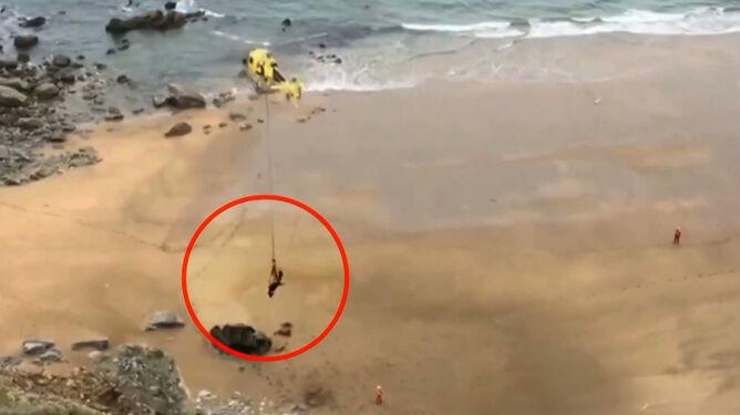 Byk spadł na plażę. Ratowano go blisko dwie doby