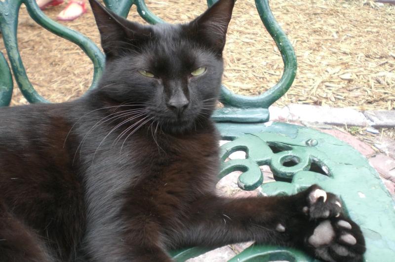 Jeden z wielu sześciopalczastych kotów żyjących w dawnej posiadłości Ernesta Hemingwaya na Key West