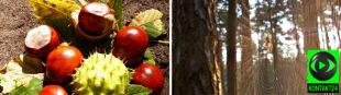 Barwy jesieni w obiektywach Reporterów 24